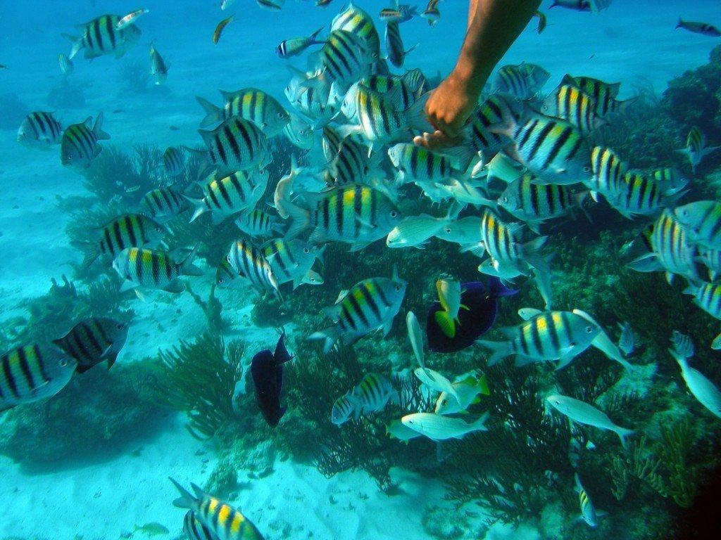 Captain Marvin Grand Cayman Snorkeling Stingray City